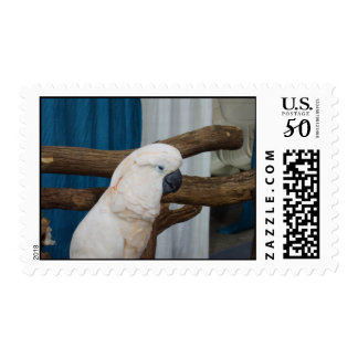 Tired Cockatoo Postage