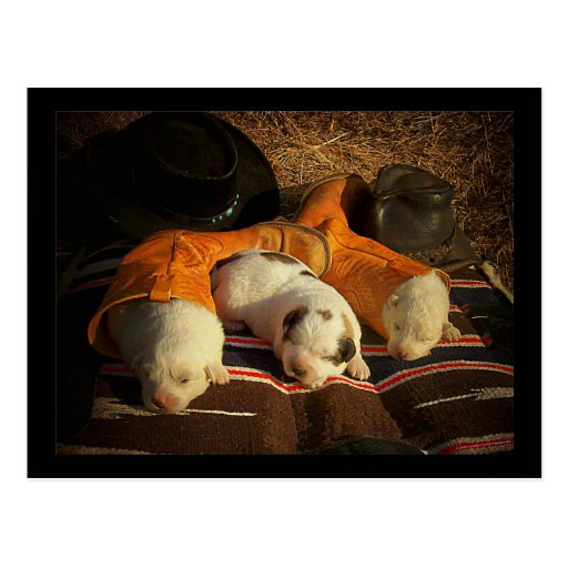 Tired Cowboy Puppies Postcards