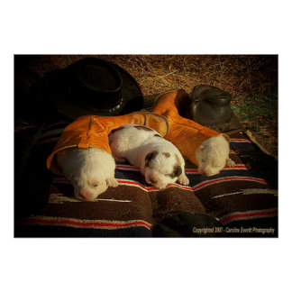Tired Cowboy Puppies Poster