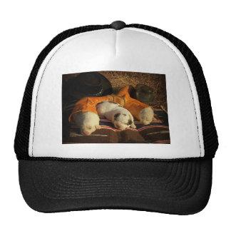 Tired Cowboy Puppies Trucker Hat