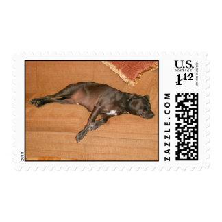 """Tired Dog."" Postage Stamp"