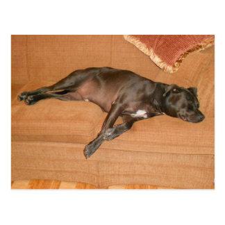 """Tired dog."" Postcard"