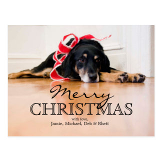 Tired Dog with Christmas ribbons Postcard