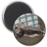 Tired Kitten Magnet