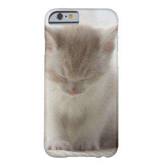 Tired Kitten Sleeping Barely There iPhone 6 Case