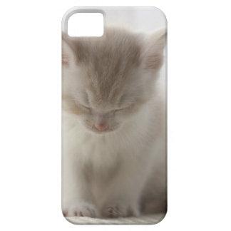 Tired Kitten Sleeping iPhone SE/5/5s Case