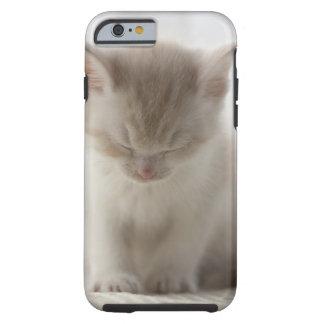 Tired Kitten Sleeping Tough iPhone 6 Case