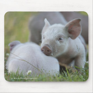 Tired Little Piggies Mouse Pad
