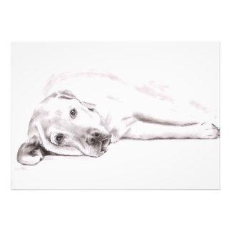 Tired perro labrador fotografías