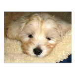 Tired Puppy Postcard