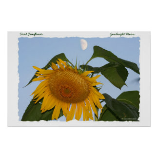Tired Sunflower...Goodnight Moon Posters