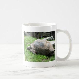Tired Tortoise Coffee Mugs