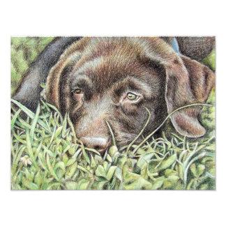 Tired Young perro labrador Impresiones Fotograficas