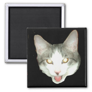 Tiro de la cabeza del gato de Punkysthe Imán Cuadrado