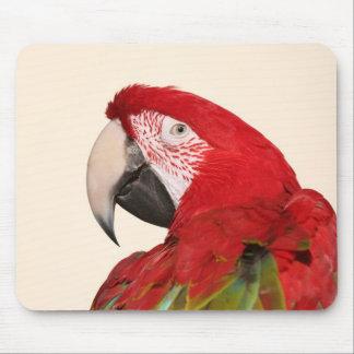 Tiro de la cabeza del loro del macaw del escarlata alfombrillas de ratón