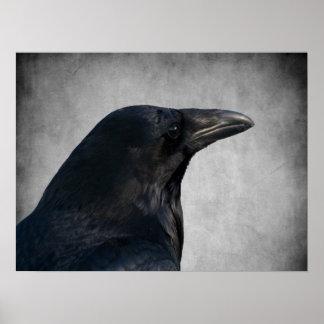 Tiro del encanto del cuervo posters