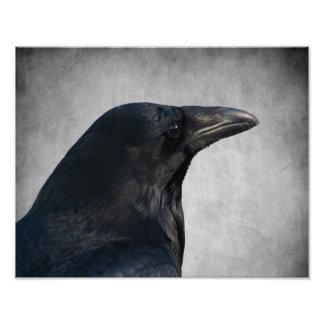 Tiro del encanto del cuervo impresión fotográfica