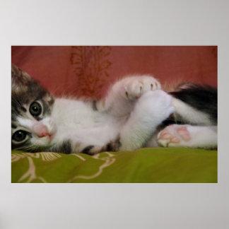 Tiro panorámico de un gatito impresiones