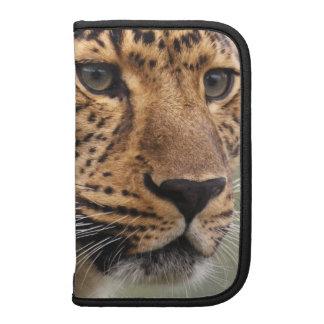 Tiro principal del leopardo planificador