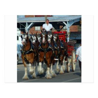 Tirón de caballo de Clydesdale 6 Postal
