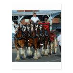 Tirón de caballo de Clydesdale 6 Postales