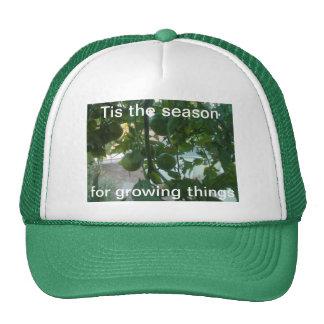 Tis la estación para el gorra creciente de las cos