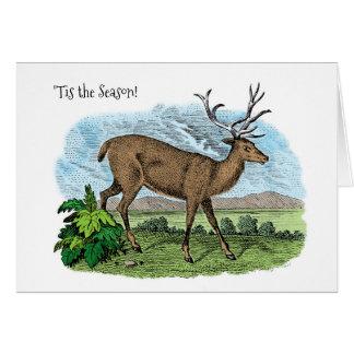Tis the Season Deer Hunter Christmas Season Card