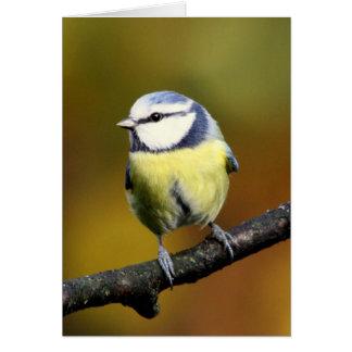 Tit azul que se sienta en una rama tarjetón