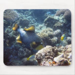 Titan Triggerfish on the Great Barrier Reef Mouse Mats