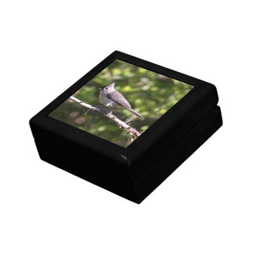 Titmouse copetudo caja de joyas