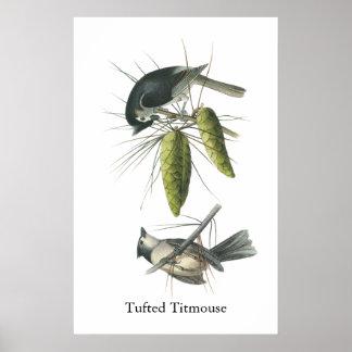 Titmouse copetudo, Juan Audubon Póster
