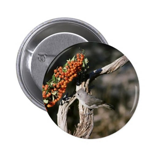 Titmouse del roble pin