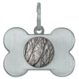 Titmouse en ramas del invierno placa de nombre de mascota