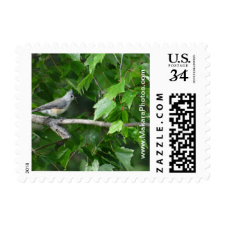 Titmouse on tree limb stamp-choose denomination postage