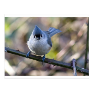 Titmouse Postcard