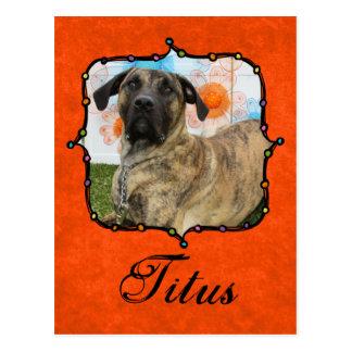 Titus - Presa Canario Mastiff Postcard