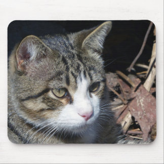 TJ the Cat is Bird Watching Mouse Pad
