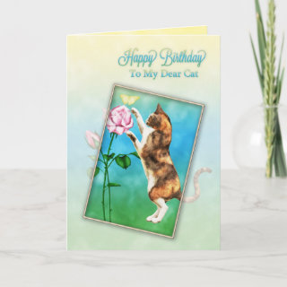 To cat, Happy Birthday with a playful cat Greeting Card