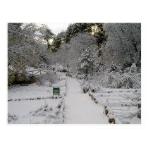 To dawn Snowed Postcard