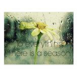 To everything a Season Rain and Flower Window Postcard