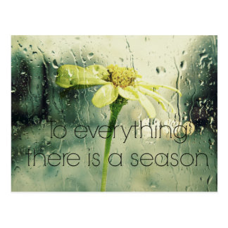 To everything a Season Rain and Flower Window Postcard
