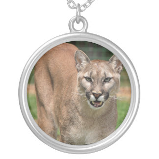 To glue CCo cougar Silver Plated Necklace