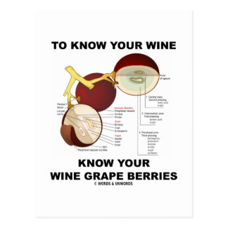 To Know Your Wine Know Your Wine Grape Berries Postcard