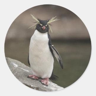 to rockhopper penguin