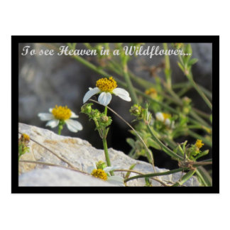 To See Heaven in a Wildflower Postcard