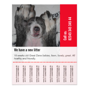 puppies for sale flyers mabel mobeetel co