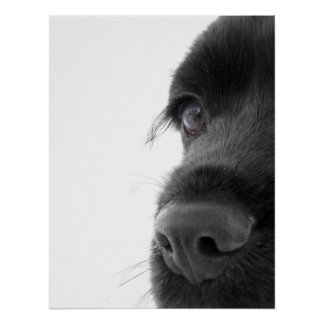 To The Soul - Chocolate Cocker Spaniel Portrait Poster