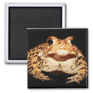 toad 2 inch square magnet