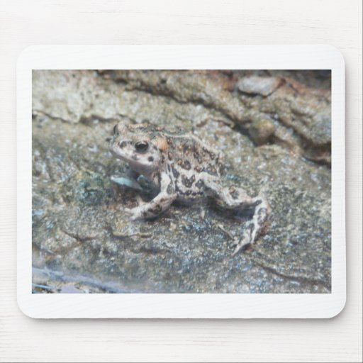 toad,baby mouse mats