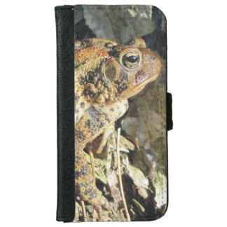 Toad Enjoying Basking in the Sun iPhone 6/6s Wallet Case